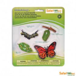 Ciclo de vida - Mariposa monarca