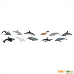 Delfines + ballenas