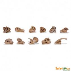 Cráneos de dinosaurios
