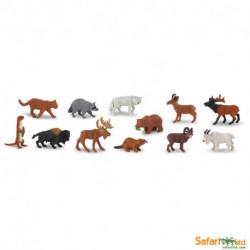 Animales América del Norte