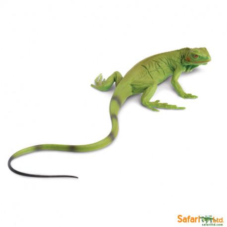 Iguana bebé