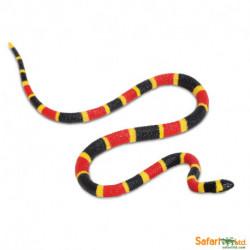 Serpiente de coral oriental bebé
