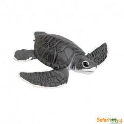 Tortuga marina cria