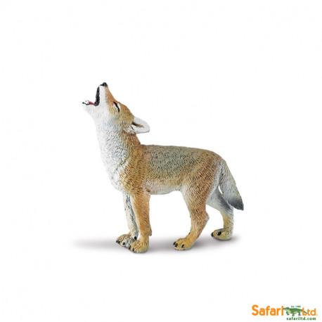 Coyote bebé