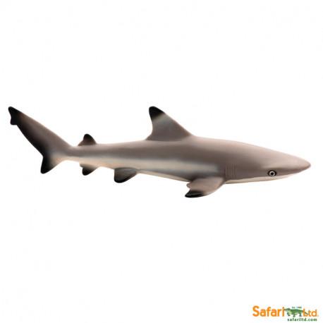 Tiburón punta negra