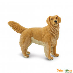 S253129 - Golden Retriever