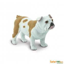S250729 - Bulldog