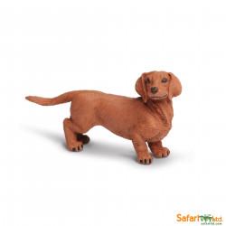 S251529 - Perro salchicha