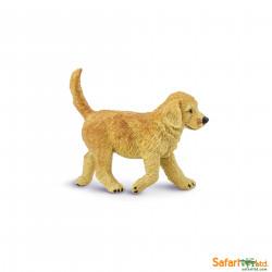 S253229 - Golden Retriever cachorro