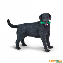 S253429 - Labrador negro