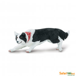 S254529 - Border Collie