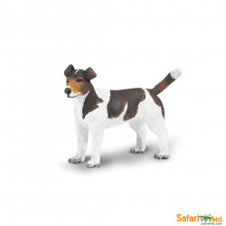 S254229 - Jack Russell Terrier