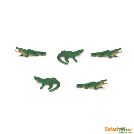 S341122 - Aligatores