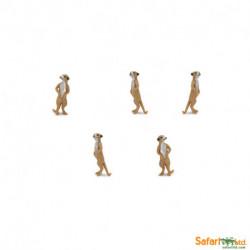 S343822 - Suricatas