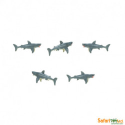 S344322 - Tiburones blancos