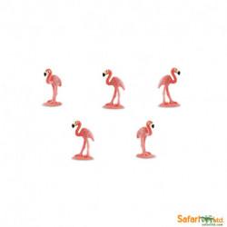 S344822 - Flamencos