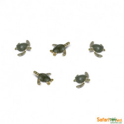 S345322 - Tortugas