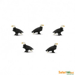 S346122 - Aguilas de cabeza blanca