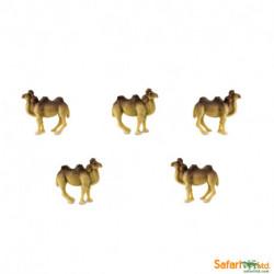 S353022 - Camellos *