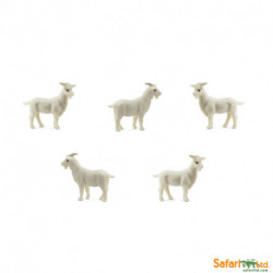 S353622 - Cabras *