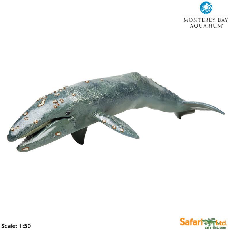 Ballena gris - mundosafari