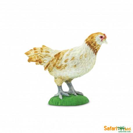 Ameraucana Chicken