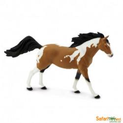 Pinto Mustang - Semental