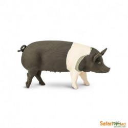 Cerdo Hampshire